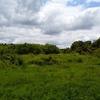 「守谷野鳥の森」へ行ってきた!感動するくらい森!!みらい平のすぐ隣街に、こんなに自然豊かな森が残っていた