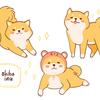 【体験談】賃貸で柴犬を飼うのはおすすめできない理由
