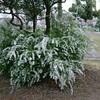 純白の花…
