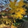 紅葉を求めて?船橋県民の森を家族でお散歩