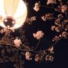 前橋 桜花の咲くころ