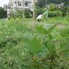 雨の中田植え パート1