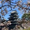 松本城の桜の様子 2019.4.16