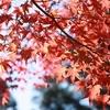 紅葉の終わりは三倉岳