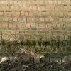 11/27:歴史の構造は「海流のやうに表層深層、多層の時間で動いてゐる