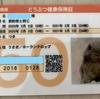 うさぎのつきの新しい動物保険証がきました。毎年腸内フローラ検査も出来るアニコムがおすすめ!