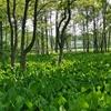 【青森旅行】ミズバショウ沼公園、弘前最勝院五重塔他。