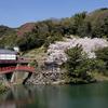 歯医者が苦手な人は桜の季節に行くのがオススメ説^^