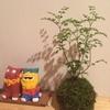 ついに我が家に植物がやってきた