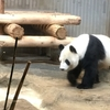 定番ですが、上野動物園に行ってきました