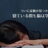 寝ている間も脳は学び続けている証拠が見つかったぞ!という研究の話