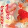 金魚の日にひな祭りを祝う
