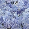 つまみ細工  紫陽花の新品種  万華鏡を作りたい!