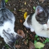 猫の写真を撮ってたら子猫がじゃれてきた。