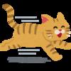 【猫が妄想?】猫が突然家の中を全力で走りだす理由とは