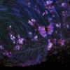 星景サルベージその66 舞う桜