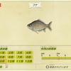【あつ森】「フナ(魚)」の出現時期・場所・時間帯情報まとめ【あつまれどうぶつの森】