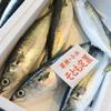 2017年4月7日 小浜漁港 お魚情報