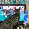 テレビに夢中な子猫!TVに映る自分の姿に興味深々!