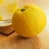 今日の柑橘は
