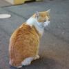 【駅訪問】近鉄吉野線 吉野神宮駅で駅猫?!