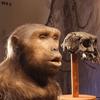 人類の進化:初期の人類たち/進化のストーリー
