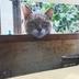 こふじの近く住んでる地域猫「こふねこ」