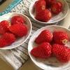 イチゴの紅ほっぺ