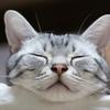 感情コントロールの基本は、「よい睡眠」?~『感情に振り回されない技術』