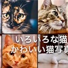 「猫を飼う心理」
