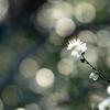人も見ぬ春や鏡のうらの梅