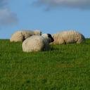 羊's 南半球からの寝言blog