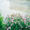 小さな可愛い花