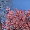 春ですね、木曜日