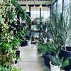 【THE GROVE STORE】静岡県のおすすめ園芸店はコチラです!【観葉植物・多肉植物・塊根植物】