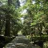 那谷寺の苔