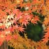 旅するホステス:京都紅葉旅行のプランニング☆