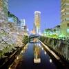 目黒川の満開の桜をPixel3の夜景モードで撮影してみた。