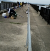 釣場調査 ファミリーフィッシング サビキ釣り 吉良サンライズパーク (宮崎港)