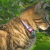 7月31日 早朝の江東区塩浜で猫さま歩き とその情景