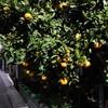 「Orange」・コードネームの記憶・15…