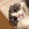 病院中に響く愛猫の絶叫