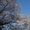 桜2020(後編)