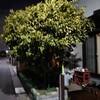 常緑樹と落葉樹…