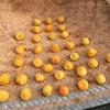 梅干しを作り、お出汁を作り、美味しいものを食べる