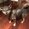 名古屋で犬三昧 『その犬の歩むところ』『約束』読書会&はしもとみお『木彫り動物美術館』