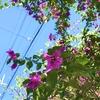 ★百日紅の仲間にみえる木の花
