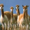ペルーの旅③動物