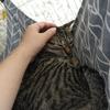 保護猫 Coteru 34日目 - 濃厚接触可