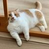 またまた愛猫による飼い主の監視が厳しくなりました。